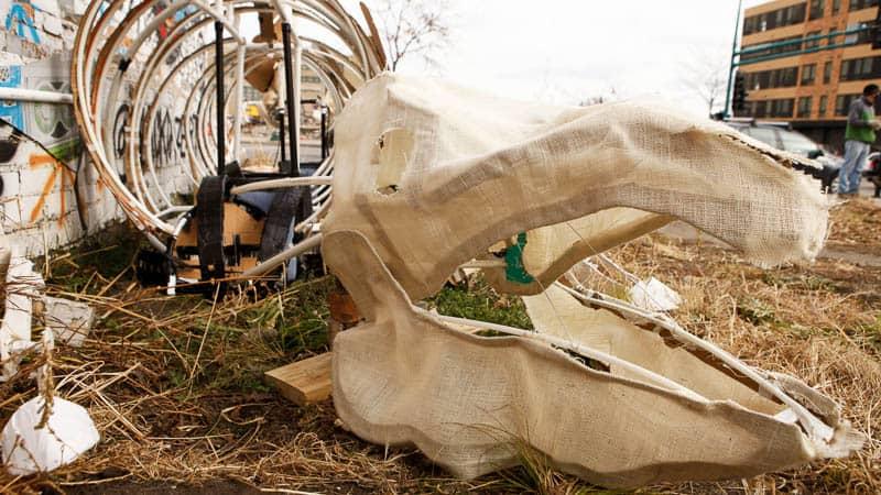 Carolyn Kopecky pig skeleton · photo: Paul Irmiter